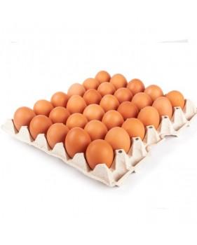 Plateau d'œufs moyens filmé